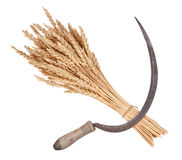 Sheaf of wheat and sickle. On white Stock Image