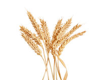 Sheaf of wheat spikelets on the white. Sheaf of yellow wheat spikelets on the white background Royalty Free Stock Photography