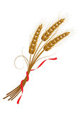 Sheaf of wheat tied with a ribbon Royalty Free Stock Images