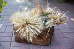 Sheaf of wheat. In a wicker basket Stock Images