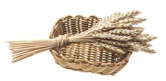 Sheaf of wheat in a wicker basket. Isolated on white Royalty Free Stock Image