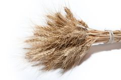 Sheaf of yellow wheat spikelets on the white background.  Royalty Free Stock Images