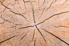 Shear of old cracked spruce trunk texture, macro Stock Images