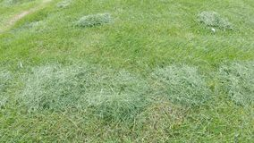 Grass after mowing the lawn. Sheared grass on the lawn after passing the tractor for mowing the lawn stock video footage