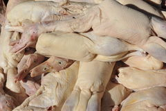 Sheared Raw Ducks Stock Photos