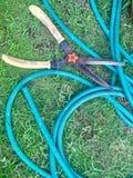 Sheares травы Стоковая Фотография