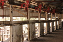 Shearing Shed Workstation Royalty Free Stock Image