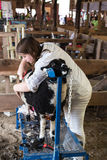 Shearing Stock Photography