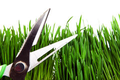 Shears on the Grass Stock Images