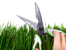 Shears on the Grass Royalty Free Stock Image