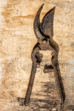 Shears plants rusty over old wooden table Stock Photography