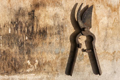 Shears plants rusty over old wooden table Stock Image