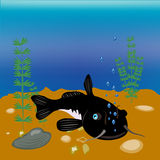sheatfish ψαριών ημέρας απεικόνιση αποθεμάτων