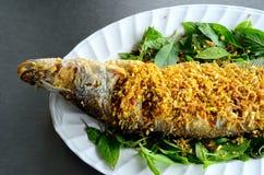 Sheatfish (Micronema apogon) Στοκ Εικόνα