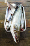 Sheatfish na aluminiowej tacy Zdjęcie Stock
