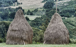 Sheaves. A farm and trees in the background Stock Images