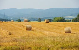 Sheaves in a field Stock Images