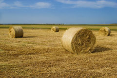 Sheaves on field. Yellow Sheaves on country field Royalty Free Stock Photos