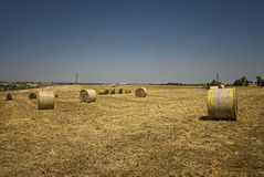 Sheaves. In the fields of Roman Royalty Free Stock Images