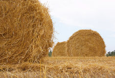 Sheaves of hay. Under the sky stock image