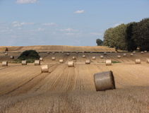 Sheaves of hay Stock Photography