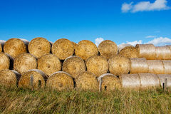 Sheaves of hay in  field in the sunshine Royalty Free Stock Images