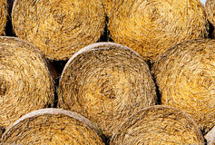 Sheaves of hay in a field in sunshine Stock Photos