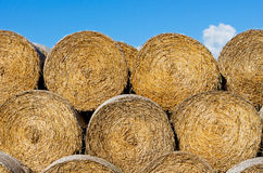 Sheaves of hay in a field in sunshine Stock Image