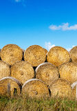 Sheaves of hay in field in the sunshine Royalty Free Stock Photo