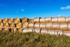 Sheaves of the hay in a field in sunshine Royalty Free Stock Photo