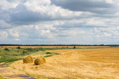 Sheaves of hay in the fields Stock Photo