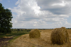 Sheaves of hay in the fields Stock Images