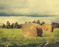 Sheaves of hay lying in a field. Royalty Free Stock Photos