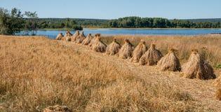 Sheaves in Kizhi Stock Image