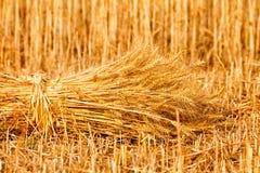 Sheaves of ripe wheat Stock Image