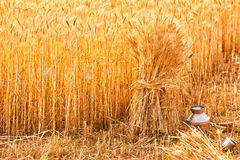 Sheaves of ripe wheat Stock Images