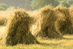 Sheaves of rye Stock Photo