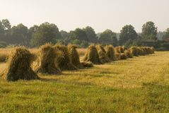 Sheaves of rye Stock Photography