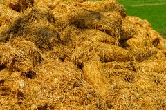 Sheaves of straw in agriculture. Sheaves of straw in the field on a sunny day, close-up royalty free stock photo