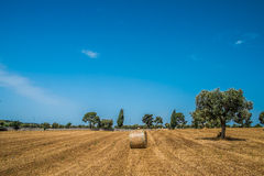 Sheaves of straw, Apulia region Royalty Free Stock Images