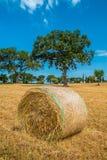 Sheaves of straw, Apulia region Stock Photography