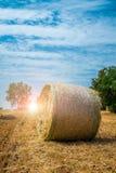 Sheaves of straw, Apulia region Royalty Free Stock Photo