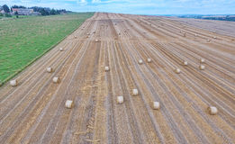 Sheaves of straw in the field. Straw bales on the field Royalty Free Stock Photo