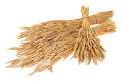 Sheaves of wheat royalty free stock photography