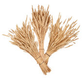 Sheaves of wheat Royalty Free Stock Image