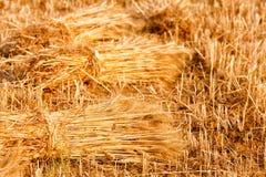 Sheaves of wheat Stock Photo