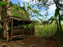 Shed at the countyside of Cuba. By sugarcane plants and palm trees Stock Photos