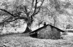 Shed in the forest. Black and white royalty free stock images