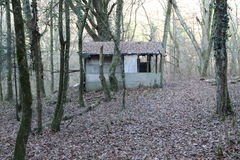Shed in forest. Broken shed in forest at the end of winter Royalty Free Stock Image