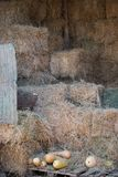 Shed with hay. stock photography